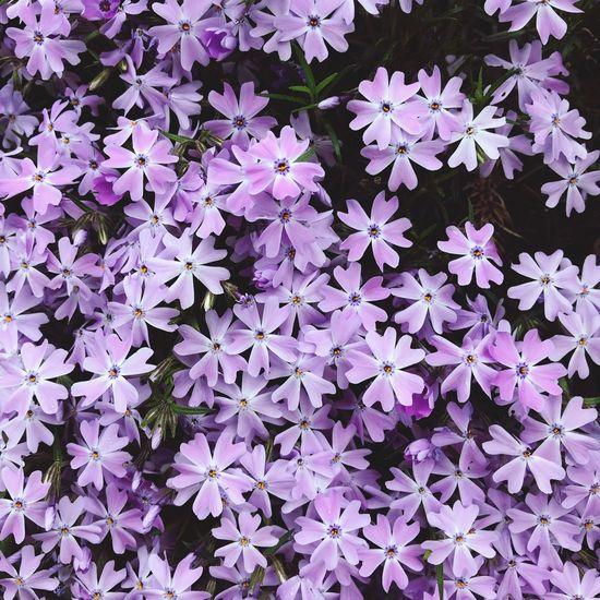 Blossoms03 Flower Flowering Plant Full Frame Vulnerability  Plant Beauty In Nature Fragility
