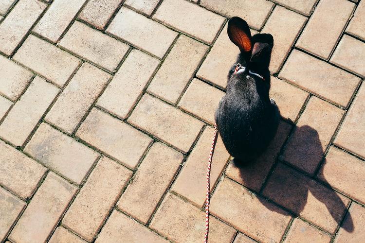 High angle view of rabbit on sidewalk