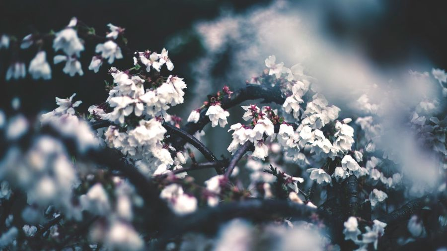 EyeEmNewHere Flower Growth Nature Freshness Blossom Beauty In Nature Blooming Close-up Fragility No People Day Outdoors Lilac