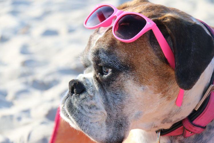 For Joey !!! Kisses from the Beach to you ???... Beach Life EyeEm Nature Lover Dog Boxer