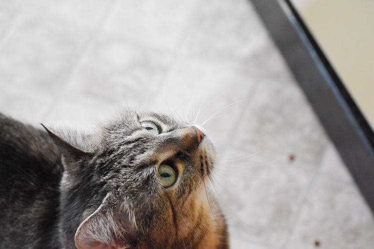 EyeEm Best Shots EyeEmNewHere EyeEmPaid Animal Themes Close-up Day Domestic Animals Domestic Cat Feline Focus On Foreground Indoors  Mammal No People One Animal Pets Portrait Whisker