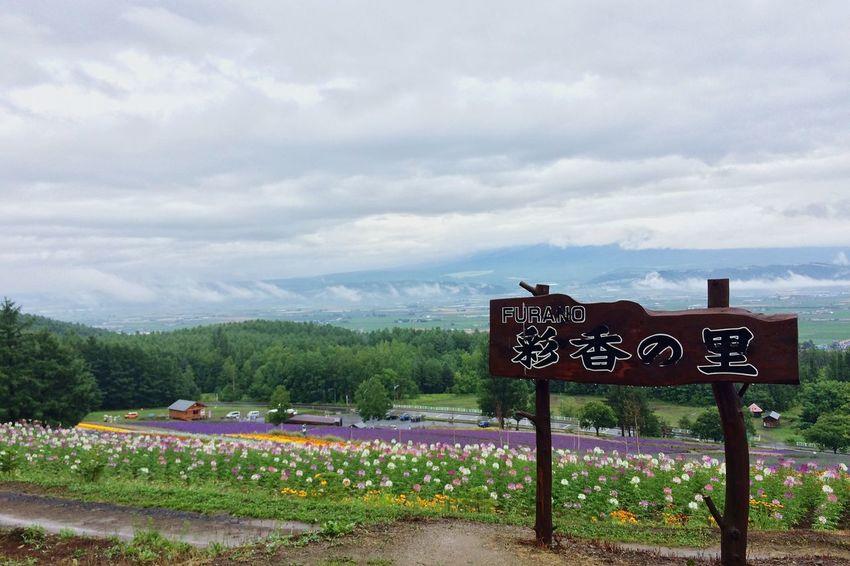 空とラベンダーと夏。 Lavender Sky Summer Furano Hokkaido Japan Traveling