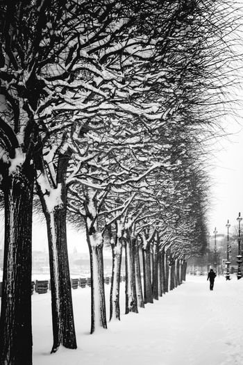 Tree Snow Cold Temperature Plant Winter Nature Treelined Trunk Tree Trunk Branch Covering Bare Tree Incidental People Beauty In Nature Day Outdoors Frozen Architecture Walking Extreme Weather Snowing