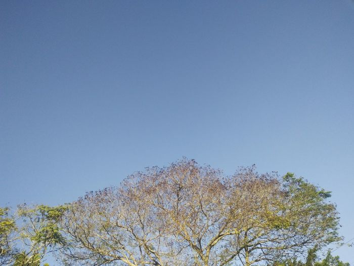 Bird Blue Clear