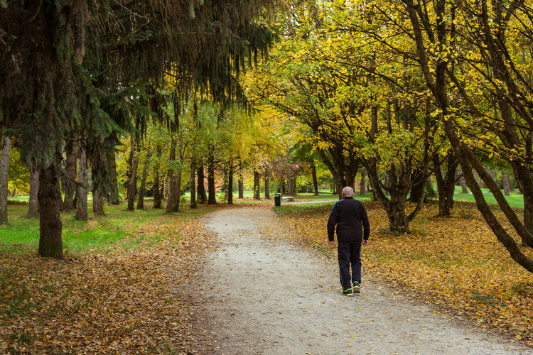 Rear View Of Man Walking On Footpath In Forest During Autumn
