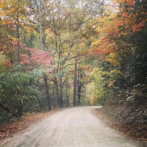 Autumn Tenneessee Autumn Colors Autumn Leaves Leaves Mountains Gravel Road Nature