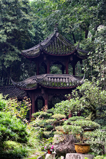 Architecture Beauty In Nature Building Exterior Built Structure Chinese Garden Day Forest Garden Green Color Growth Nature No People Outdoors Pagoda Place Of Worship Plant Religion Roof Spirituality Tree