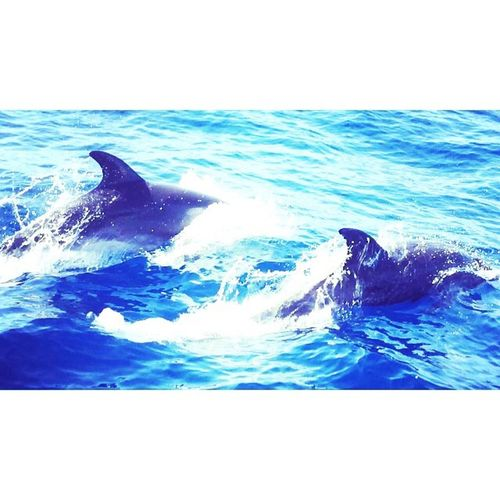 Photographic Memory Dolphins Sealife Holiday Boat Sun Happy Lifestyles Babies Memories