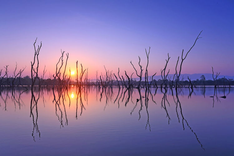 Reflect the view of the beautiful perennial dead tree on water with sunrise, Natural background Reflection Sky Sunset Water Beauty In Nature Tranquility Scenics - Nature Lake Tranquil Scene Sun Idyllic Nature Orange Color Waterfront No People Silhouette Non-urban Scene Symmetry Outdoors Purple Romantic Sky Reflection Lake Tree Dead Tree Sunrise ASIA Asian  Thailand Nobody Silhouette Died Tree Died