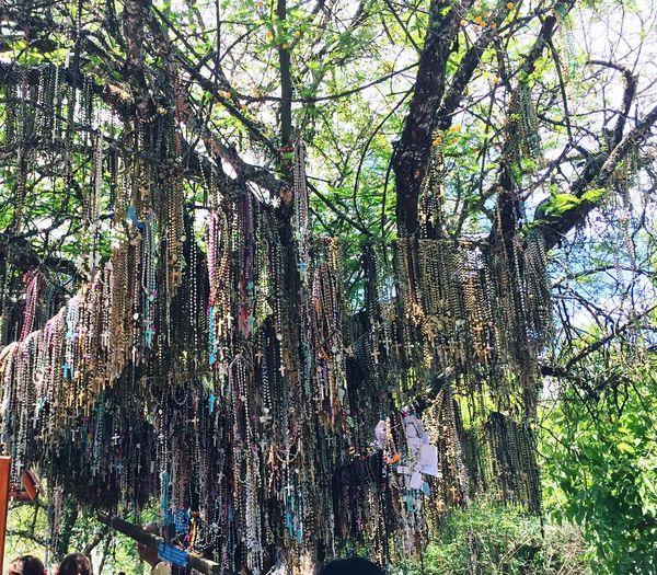 God Tree Growth