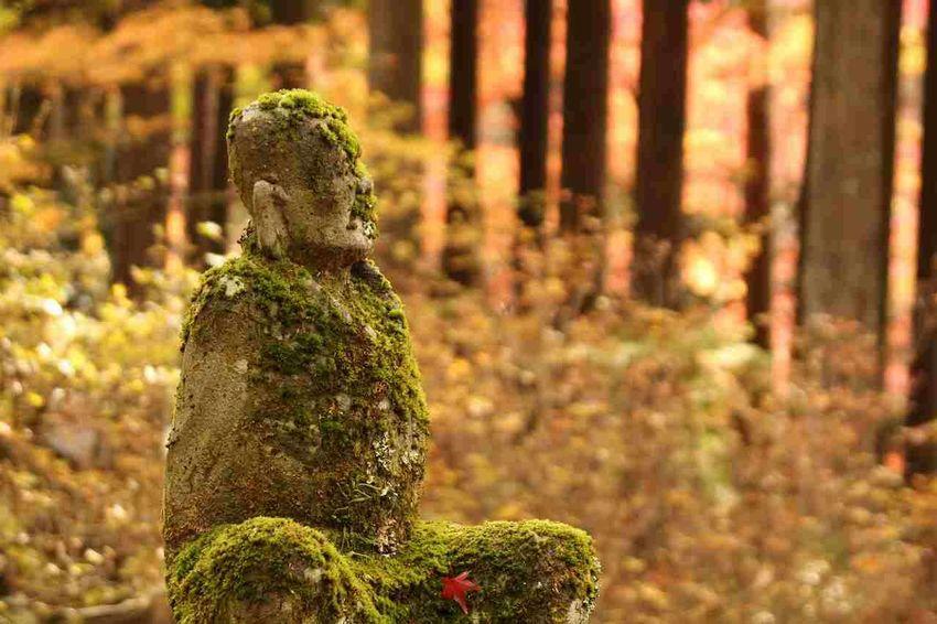 Autumn Autumn Colors Japan Hakone No People Temple