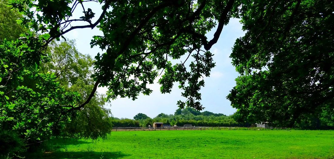 Farm life.... Plant Tree Green Color Growth Nature Field Land Day Grass No People Beauty In Nature Sky Tranquility Landscape Outdoors Environment Branch Built Structure Foliage Lush Foliage