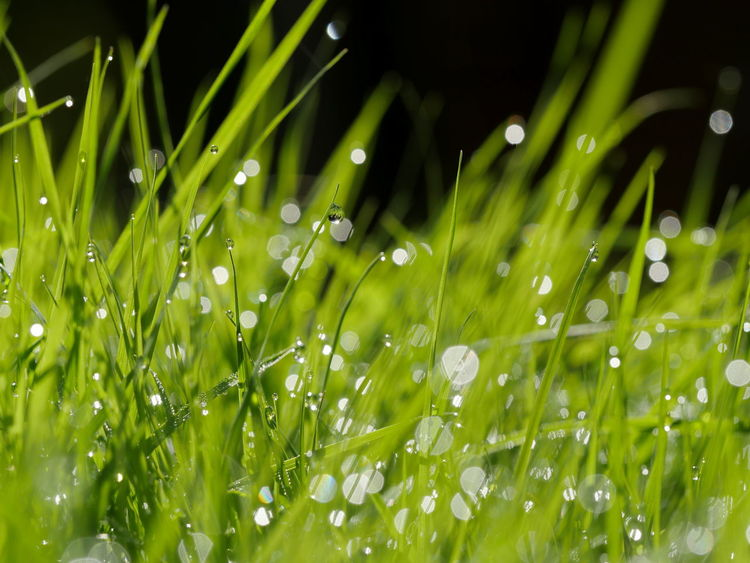 Blade Of Grass Dew Dew Drops Droplets Drops Fragility Freshness Full Frame Grass Grassland Green Macro Nature No People Outdoors Perspective Reflection Selective Focus From My Point Of View Close-up Close Up The Magic Mission Ladyphotographerofthemonth Maximum Closeness