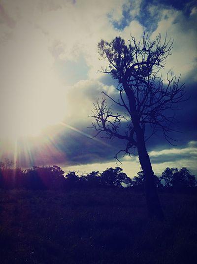 Landscapephotography Bushwalking Peel Region WesternAustralia Mandurah Exploring Walking The Dog Taking Photos Content