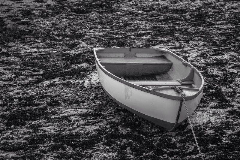 A small boat floating on a bed of seaweed and stones. Boat Seaweed Langstone Harbour  Little Boat