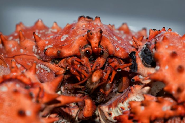 Crabs 🦀🦀🦀 Food Photography Freezer Sea Life SEAFOOD🐡 Crab - Seafood Crabs Crab EyeEm Selects Seafood Food No People Close-up Animal Themes Food And Drink Animals In The Wild
