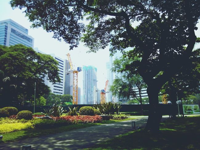 Street Architecture Real People Makati, Philippines Outdoors The Way Forward Lifestyles Makati Triangle Tree Makatiview Green Color Modern Urban Skyline Ayala Building Exterior Plants 🌱 Beauty In Nature Earth Technology Cityscape