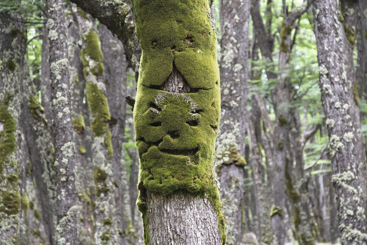 Tree Trunk Tree Trunk Plant No People Nature Focus On Foreground Growth Green Color Day Moss Forest Textured  Animal Wildlife Close-up Outdoors Face