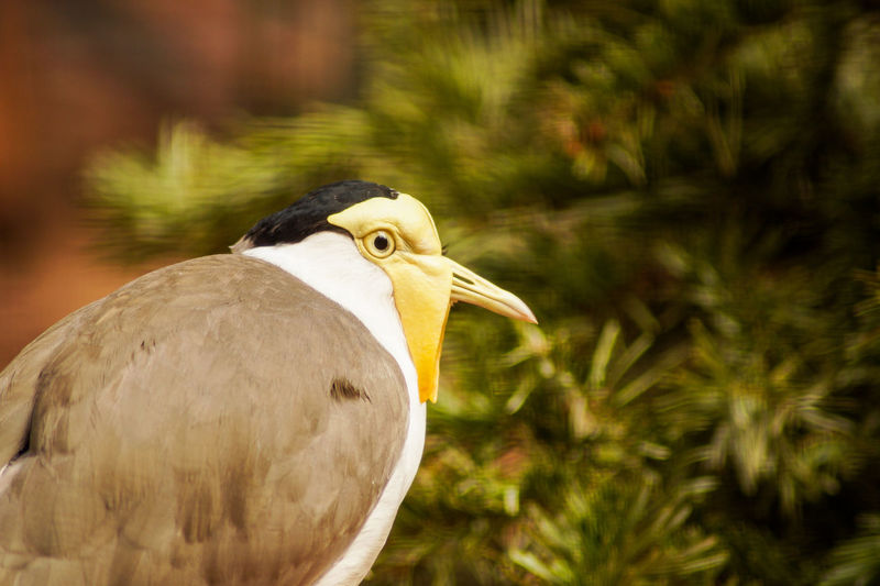 Portrait of a bird Bird Animal Themes Animal Vertebrate Animals In The Wild One Animal Animal Wildlife Focus On Foreground Day No People Close-up Nature Side View Plant Outdoors Animal Body Part Perching Beak Sunlight Tree Animal Head