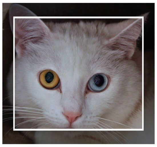 Augen Animal Animal Body Part Cat Close-up Domestic Cat Looking At Camera No People Pets Portrait