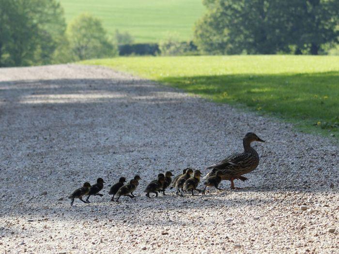 Flock of birds on road amidst field