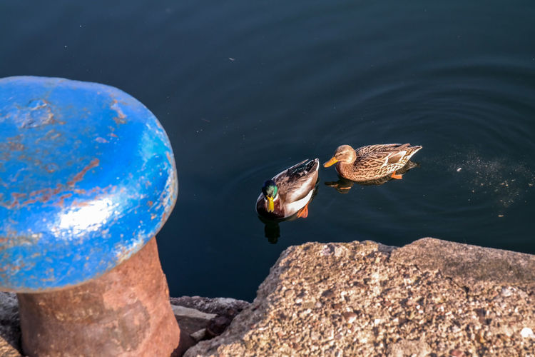 swimming par of ducks next to a bollard Animal Themes Animal Wildlife Animals In The Wild Bird Bollard Day Duck Pair Ducks Flensburg Flensburg Förde Harbour Harbour View Nature No People Outdoors Peaceful Sunny Day Swimming Swimming Ducks Water Winter