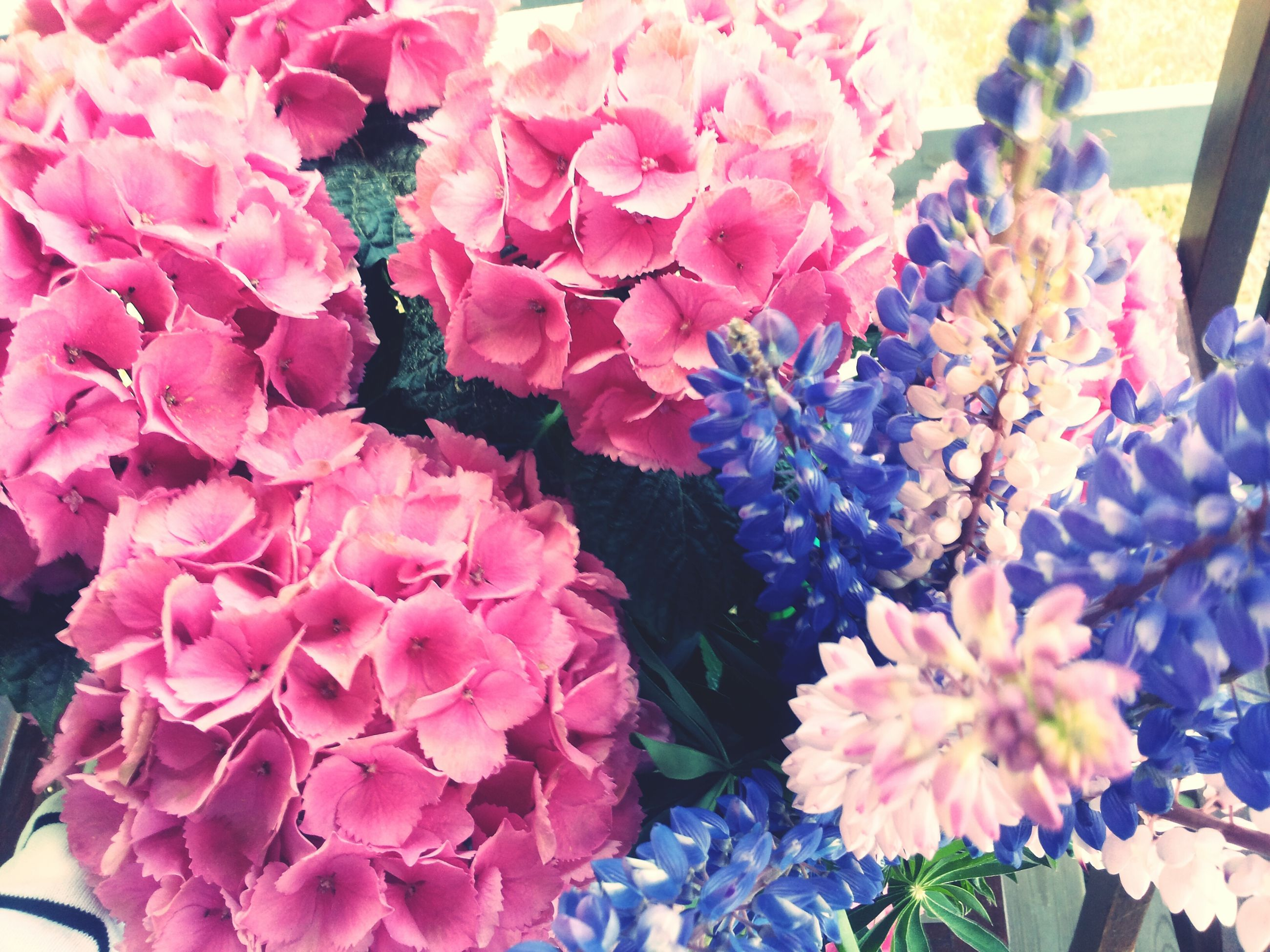 flower, freshness, petal, fragility, pink color, indoors, beauty in nature, flower head, growth, close-up, nature, high angle view, plant, bunch of flowers, blooming, abundance, bouquet, no people, decoration, day