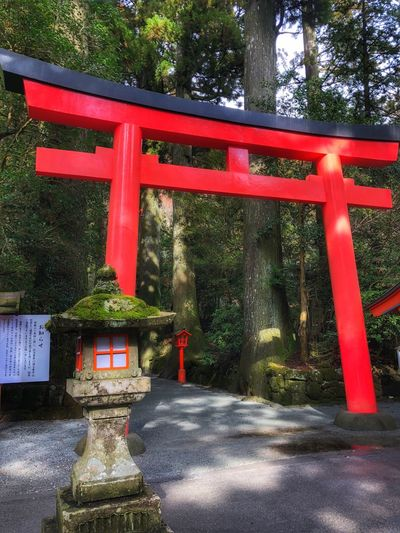 Hakone Shrine Hakone Japan Red Religion Spirituality Shrine Tree Place Of Worship Travel Destinations Day Outdoors No People Nature Architecture