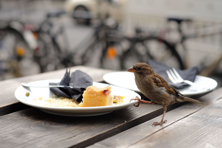Sparrow by cake on table at sidewalk cafe