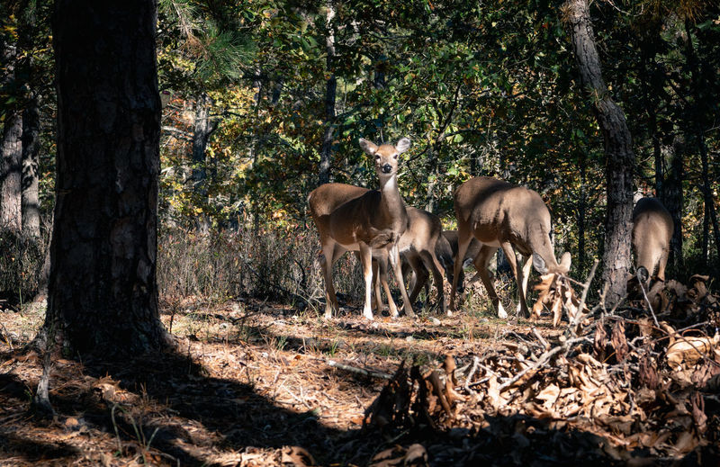 Deer in the forest in autumn