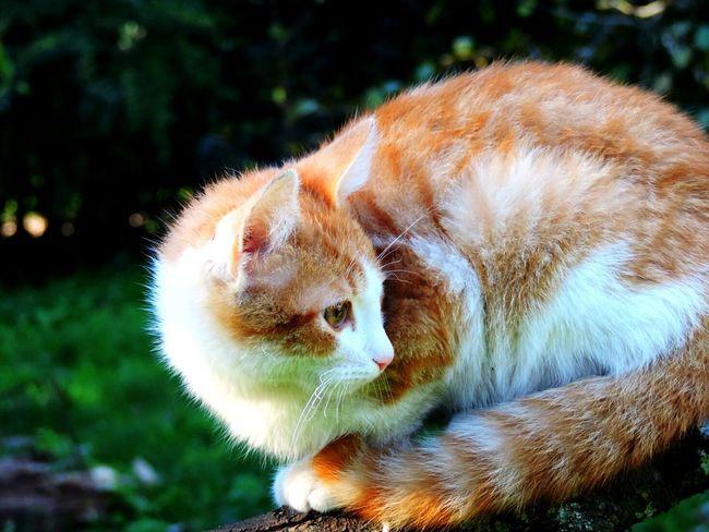 Cat Cat♡ Gato Gatos Cats Cats 🐱 Cat Lovers Cat Photography Cats Of EyeEm Gato😽 Gatos 😍 Gatito Gatto😸 Gatitos Mascota🐶 Mascota Mascotas Mascotas 🐶 Mascotas :) Pet Pets Pets Of Eyeem Green Nature Catlovers