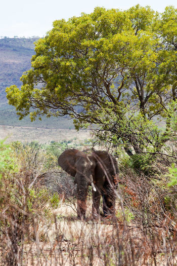 View of elephant standing on land