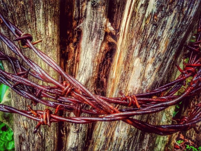 well hope yall are all havin a happy Barbwire Wednesday Rust Never Sleeps Barbed Wire Wednesday Hdr_Collection