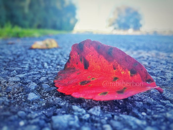 Eye4photography  Autumn Fall Leaves Nature EyeEm Nature Lover Streetphotography Solitary Landscape Landscape_Collection