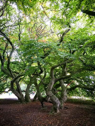 Nikon Tree