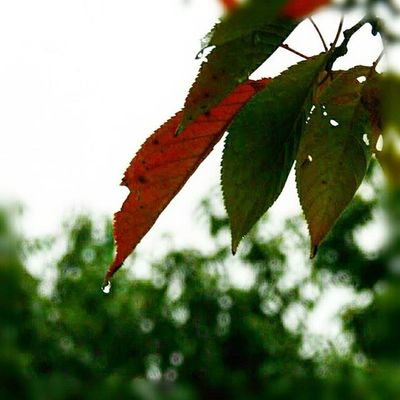 🍂 お早うございます🎶😃 Goodmorning🎶(* ´ ▽ ` *)ノ ※ 雨です☔🌂(10ºc) It's raining ※ 雨粒 RainDrop 雨 Rain 植物 Plants 日本 Japan 自然 Natur 綺麗 Beautiful 癒し Comfort 休息 Rest 安らぎ Peace Happiness Positivity 💦☔️ View_Japan_nagoya_mitu