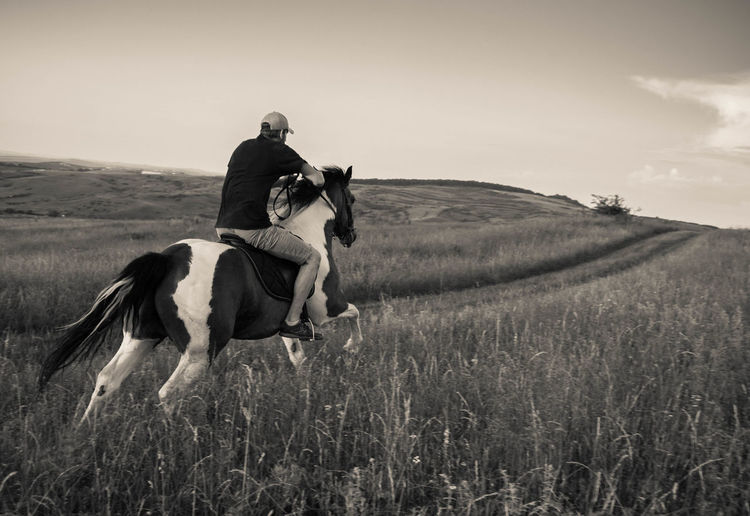 Man riding horse on grassy field