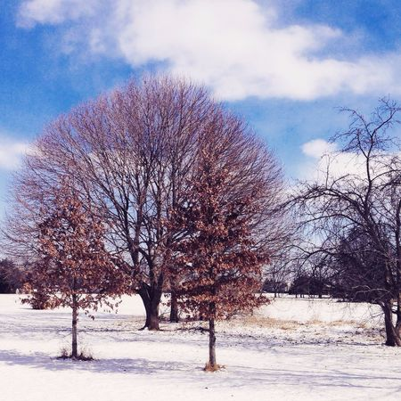 Awaiting the snowstorm overnight. This years winter has been crazy. 7 more inches of snow. I'm so ready for spring. My Photography Beautiful Nature EyeEm Natue Lover Thankful Clouds And Sky Beautiful Snow Trees Winter Tadaa Community