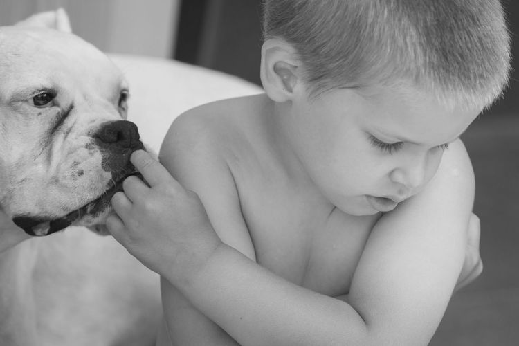 [Canon EF 400mm f/4 DO IS II USM] Boxer Dog Boy And Dog Childhood Cute Dog Domestic Animals Domestic Life Friendship Human-animal Friendship Innocence Leisure Activity Lifestyles Love Person Pet Pet Portraits Snooping Togetherness