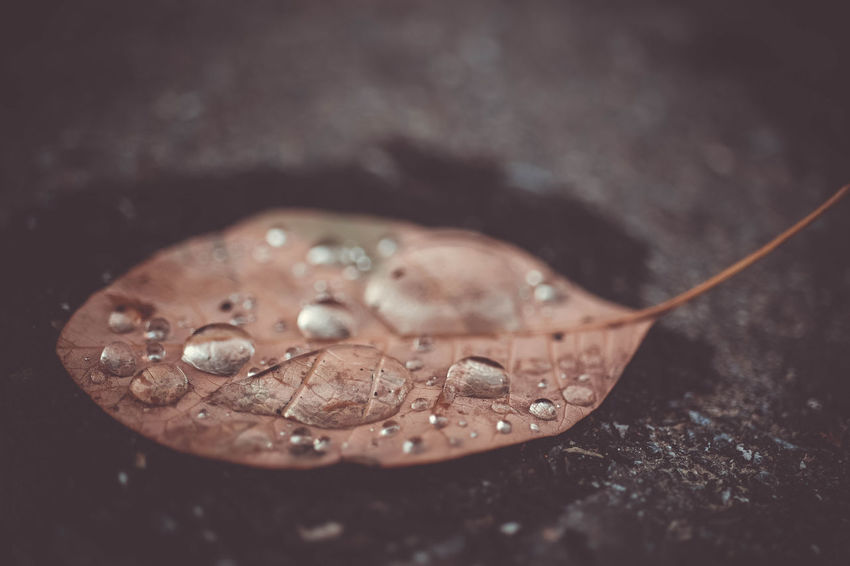 wet leaf Autumn Rain Raindrops Black Background Close-up Day High Angle View Leaf Leaves No People Outdoors Switzerland