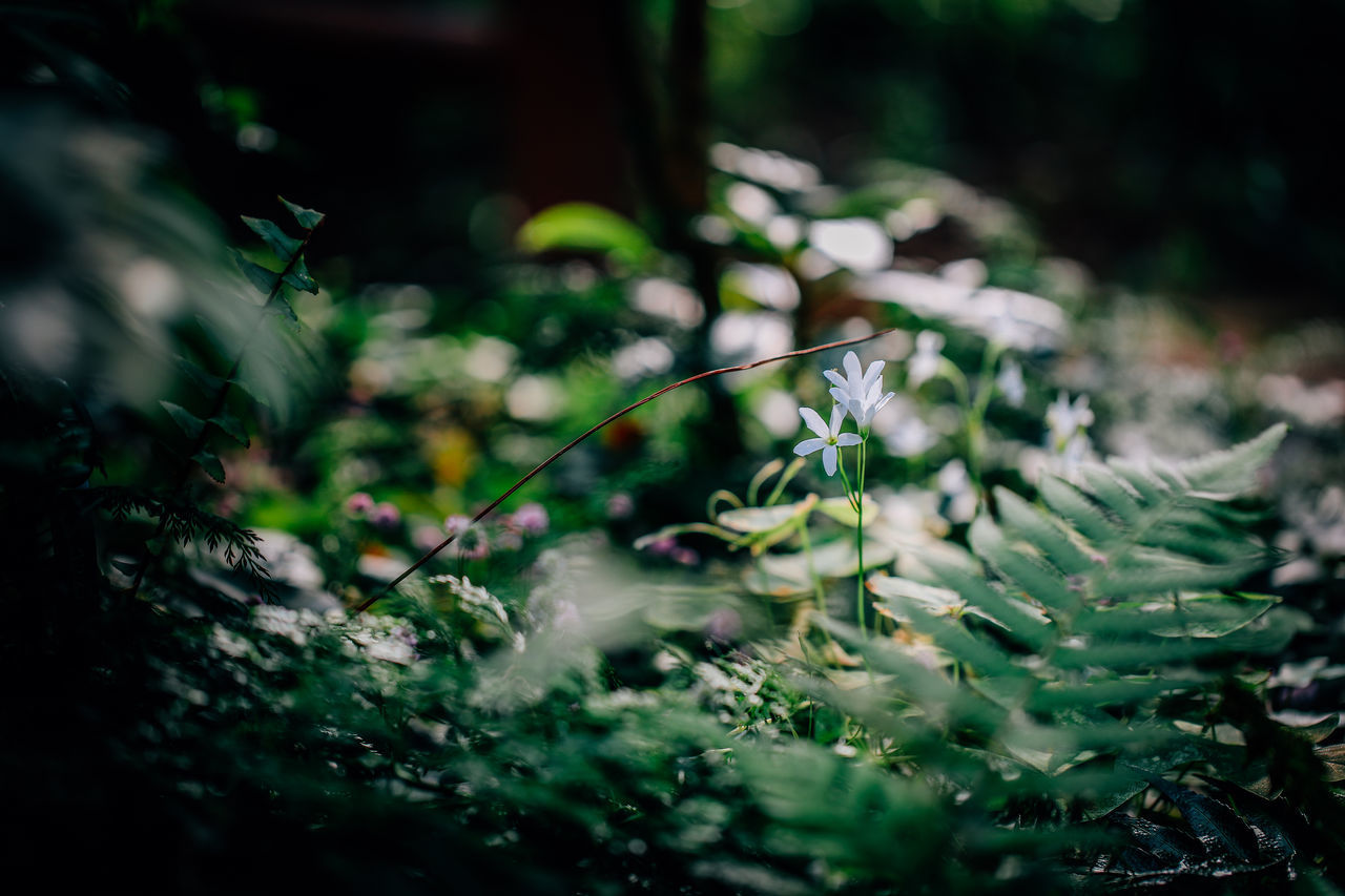 nature, selective focus, growth, plant, no people, outdoors, beauty in nature, day, close-up, freshness, water, fragility