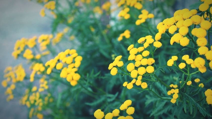 Yellow Flower Nature Fragility Beauty In Nature No People Outdoors Day