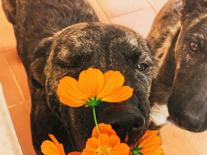 Mammal One Animal Animal Pets Domestic Domestic Animals Canine Animal Themes Flowering Plant Dog No People Flower Vertebrate Close-up Plant Flower Head Freshness Nature Fragility Beauty In Nature