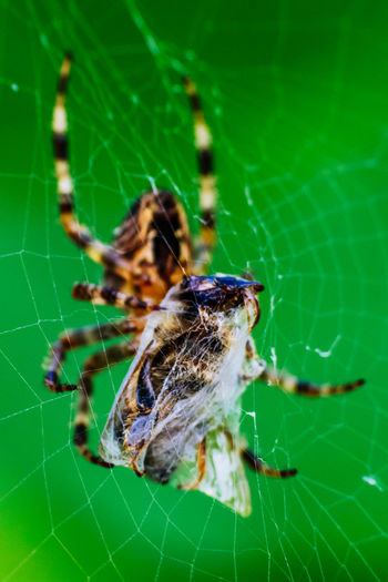 Animal Themes Beauty In Nature Close-up Day Extreme Close Up Extreme Close-up Focus On Foreground Fragility Green Green Color Insect Natural Pattern Nature No People One Animal Outdoors Plant Spider Spider Close Up Spider Macro Spider Web Spinne Spinnenmakro Wildlife