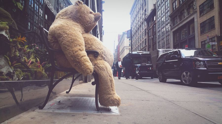 Feeling like this? Well it's Friday go out and have some fun! Photographer Streetphotography Live Bold Check This Out Bear NYC Photography Art Buythisprint Landscape Prints