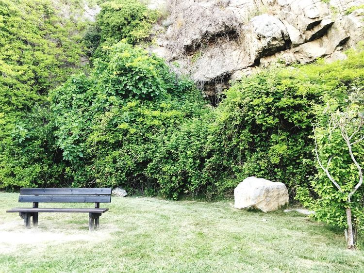 The Secret Spaces Nature Tranquility Rock - Object Green Color Tranquil Scene Idyllic Beauty In Nature Outdoors No People Day Scenics Growth Tree Landscape Grass