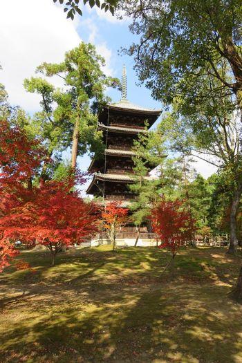 京都 日本 仁和寺 五重塔 Kyoto, Japan Architecture Autumn Beauty In Nature Day Grass Growth Nature No People Outdoors Park - Man Made Space Sky Tree