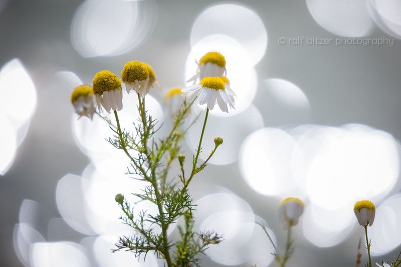 Flower Fragility Petal Freshness Nature Flower Head No People Plant Yellow Close-up Growth Blooming Indoors  Day