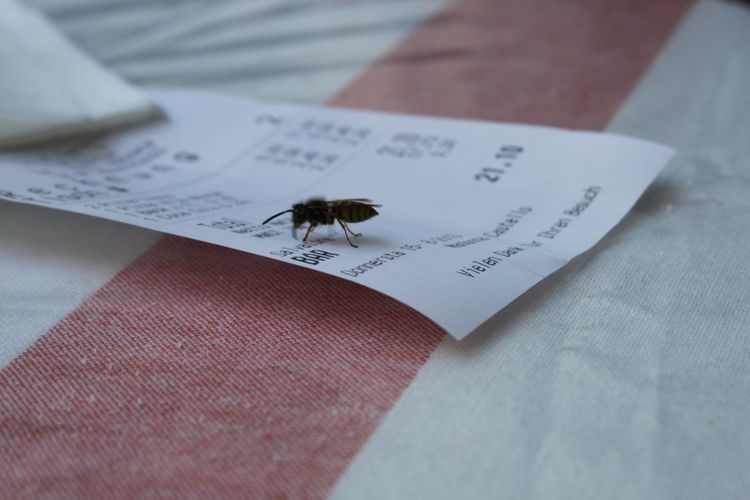 Fly Close-up Day Indoors  Insect Insect On Bill No People Paper Table Text