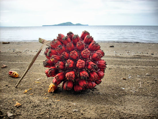 Beach Beauty In Nature Close-up Day Flower Flower Head Freshness Horizon Over Water Nature No People Outdoors Petal Rambutans Red Sand Scenics Sea Sky Tranquility Water